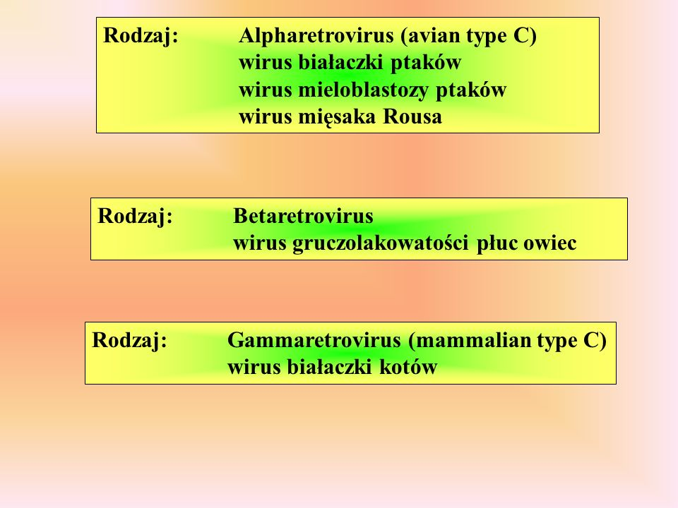 v-onc DNA- RNA+