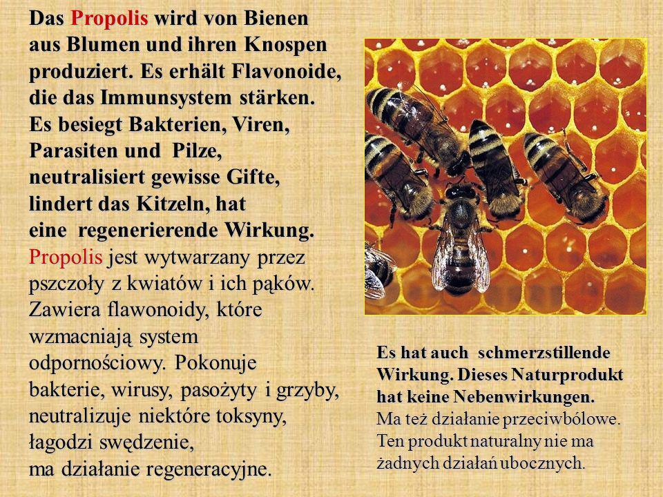 Das Propolis wird von Bienen aus Blumen und ihren Knospen produziert. Es erhält Flavonoide, die das Immunsystem stärken. Es besiegt Bakterien, Viren,