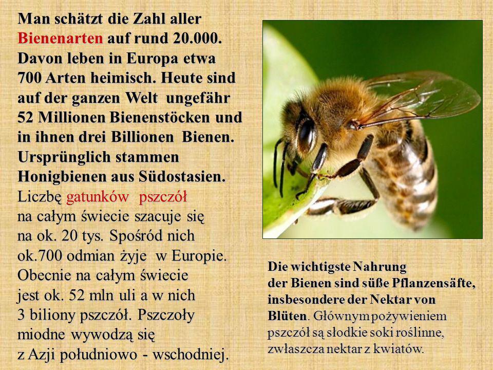 Man schätzt die Zahl aller Bienenarten auf rund 20.000. Davon leben in Europa etwa 700 Arten heimisch. Heute sind auf der ganzen Welt ungefähr 52 Mill