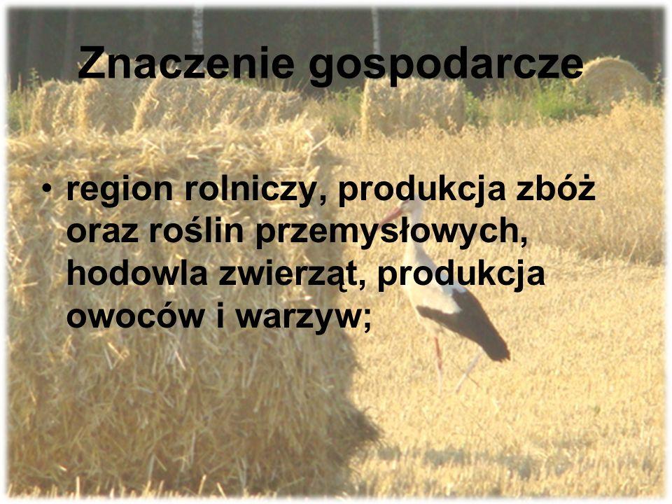 Znaczenie gospodarcze region rolniczy, produkcja zbóż oraz roślin przemysłowych, hodowla zwierząt, produkcja owoców i warzyw;