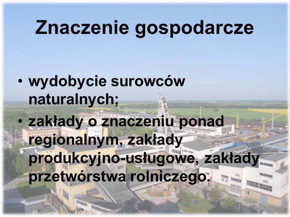 Znaczenie gospodarcze wydobycie surowców naturalnych; zakłady o znaczeniu ponad regionalnym, zakłady produkcyjno-usługowe, zakłady przetwórstwa rolniczego.