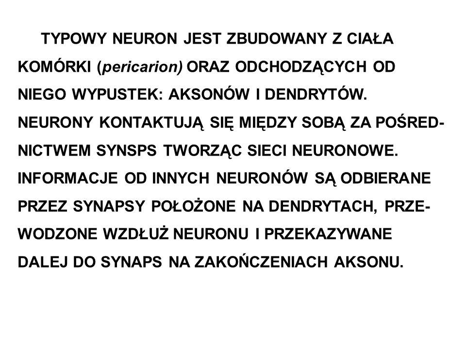 TYPOWY NEURON JEST ZBUDOWANY Z CIAŁA KOMÓRKI (pericarion) ORAZ ODCHODZĄCYCH OD NIEGO WYPUSTEK: AKSONÓW I DENDRYTÓW. NEURONY KONTAKTUJĄ SIĘ MIĘDZY SOBĄ