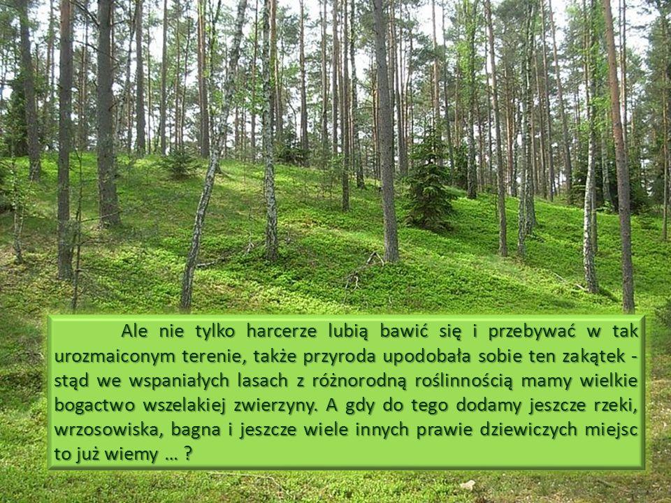 Ale nie tylko harcerze lubią bawić się i przebywać w tak urozmaiconym terenie, także przyroda upodobała sobie ten zakątek - stąd we wspaniałych lasach z różnorodną roślinnością mamy wielkie bogactwo wszelakiej zwierzyny.