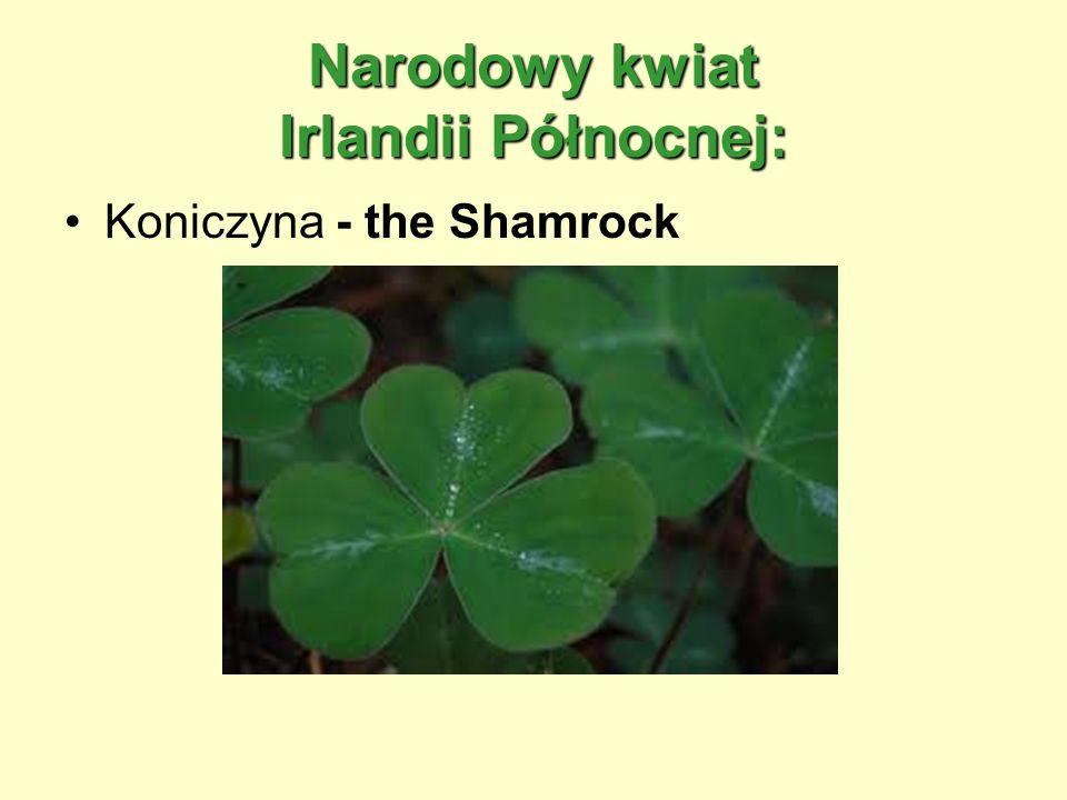 Narodowy kwiat Irlandii Północnej: Koniczyna - the Shamrock