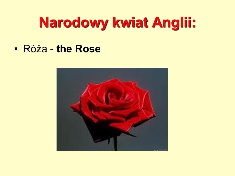 Narodowy kwiat Anglii: Róża - the Rose
