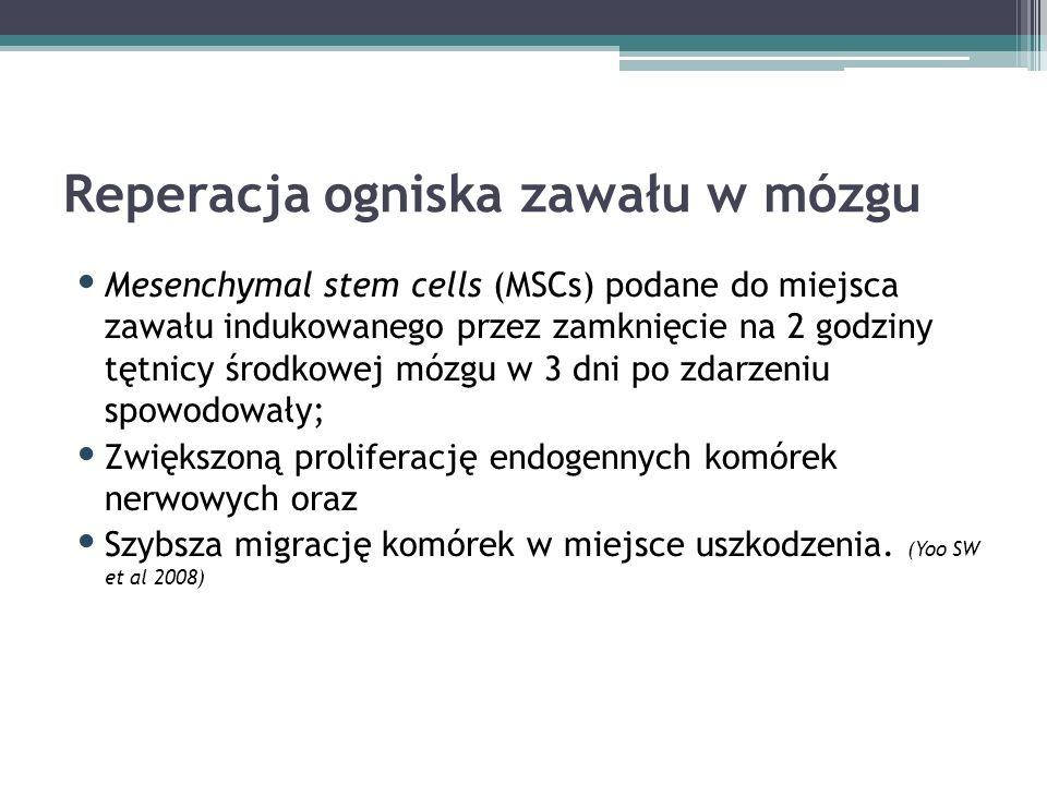 Reperacja ogniska zawału w mózgu Mesenchymal stem cells (MSCs) podane do miejsca zawału indukowanego przez zamknięcie na 2 godziny tętnicy środkowej mózgu w 3 dni po zdarzeniu spowodowały; Zwiększoną proliferację endogennych komórek nerwowych oraz Szybsza migrację komórek w miejsce uszkodzenia.
