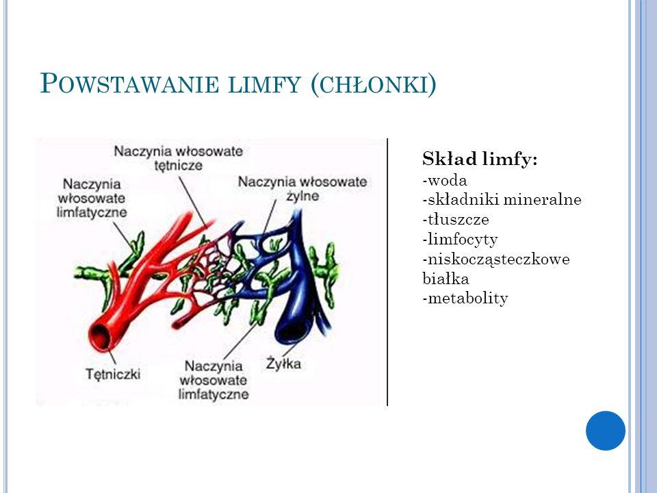 P OWSTAWANIE LIMFY ( CHŁONKI ) Skład limfy: -woda -składniki mineralne -tłuszcze -limfocyty -niskocząsteczkowe białka -metabolity