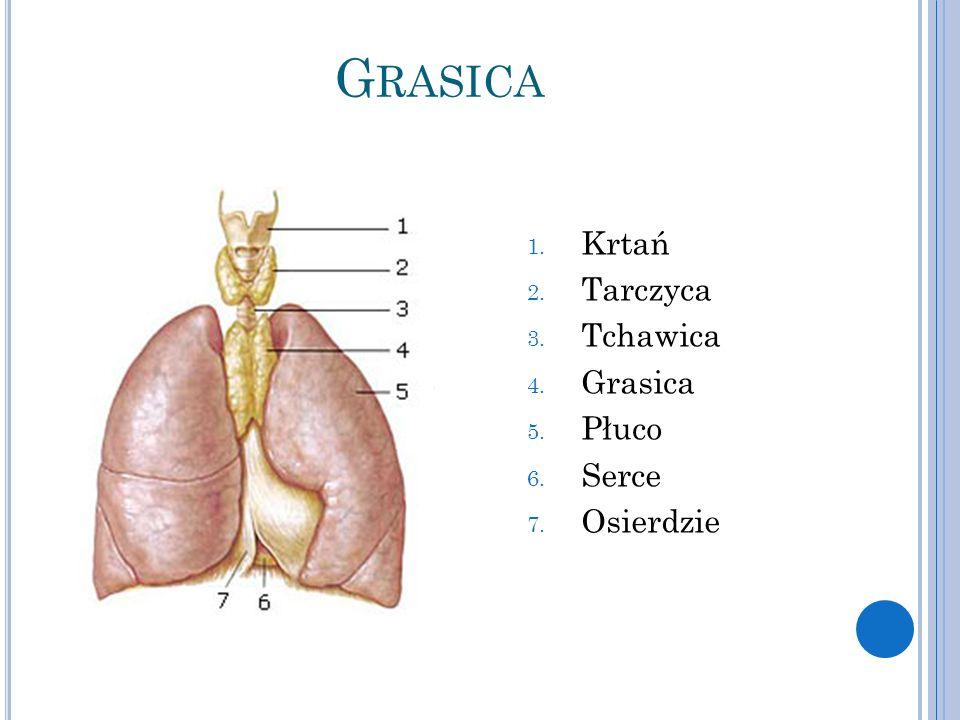 G RASICA 1. Krtań 2. Tarczyca 3. Tchawica 4. Grasica 5. Płuco 6. Serce 7. Osierdzie