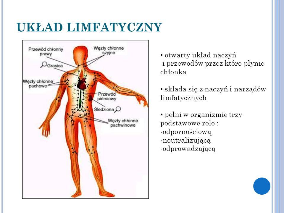 UKŁAD LIMFATYCZNY otwarty układ naczyń i przewodów przez które płynie chłonka składa się z naczyń i narządów limfatycznych pełni w organizmie trzy podstawowe role : -odpornościową -neutralizującą -odprowadzającą