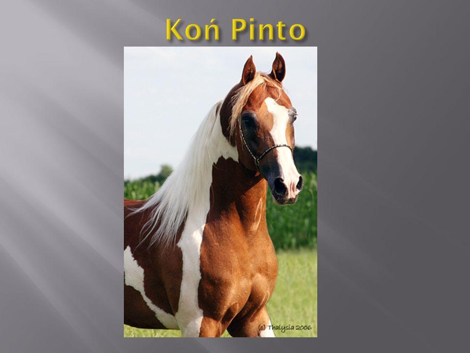 Koń fryzyjski – rasa koni zimnokrwistych pochodząca z historycznej krainy Fryzji.
