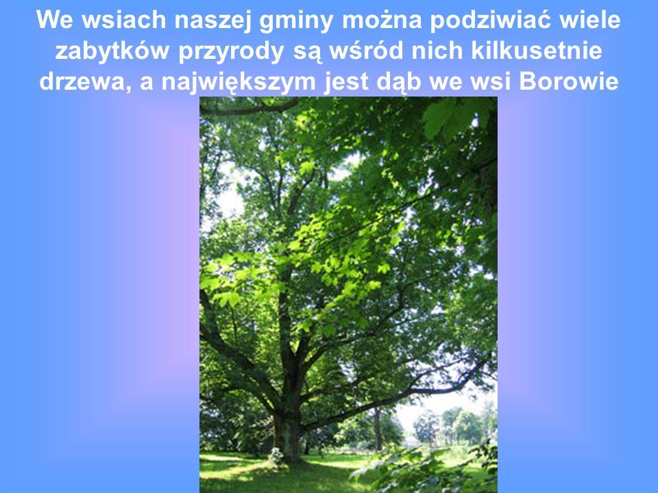 We wsiach naszej gminy można podziwiać wiele zabytków przyrody są wśród nich kilkusetnie drzewa, a największym jest dąb we wsi Borowie