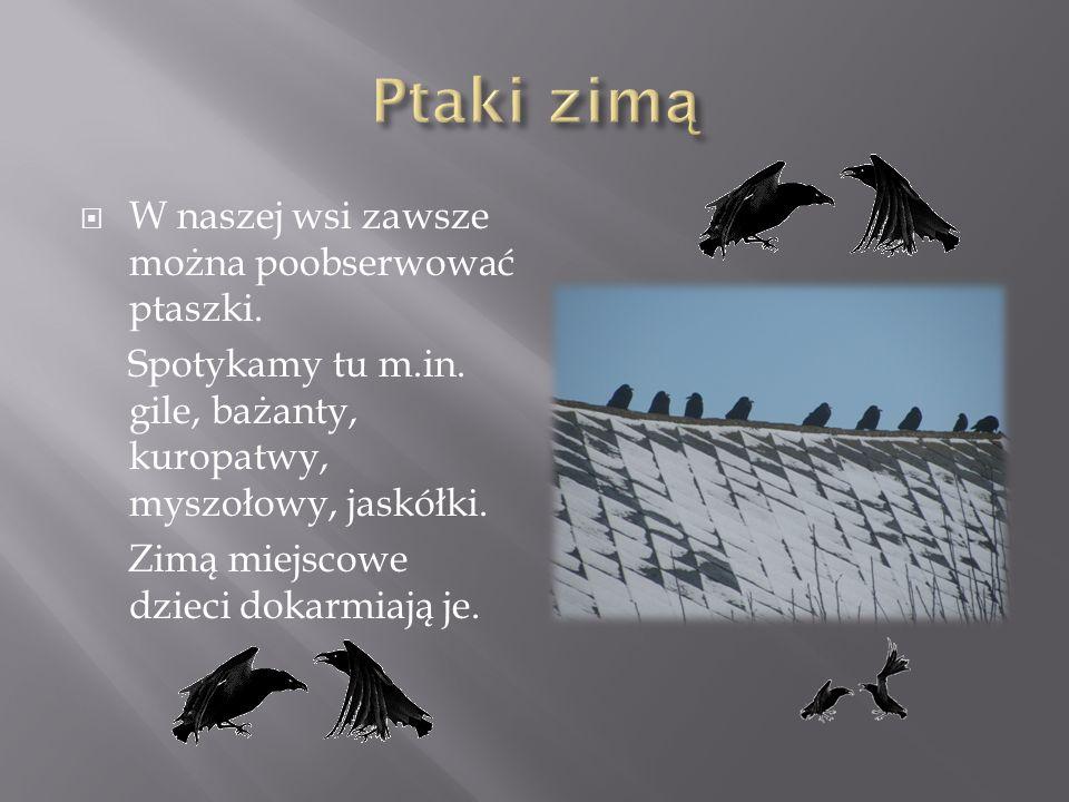 W naszej wsi zawsze można poobserwować ptaszki.Spotykamy tu m.in.