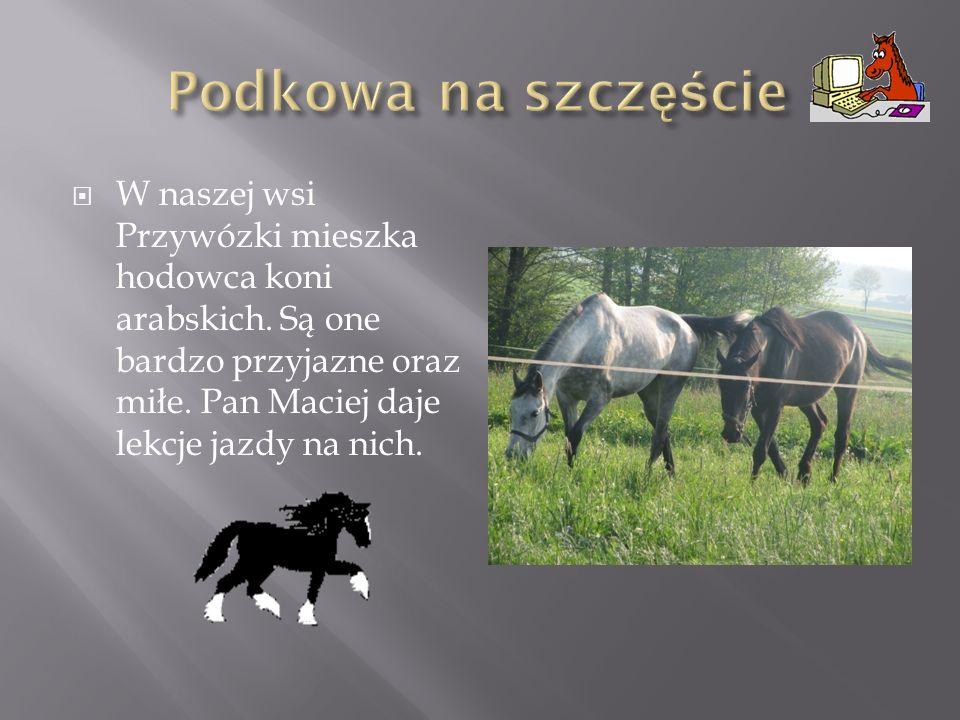 W naszej wsi Przywózki mieszka hodowca koni arabskich.