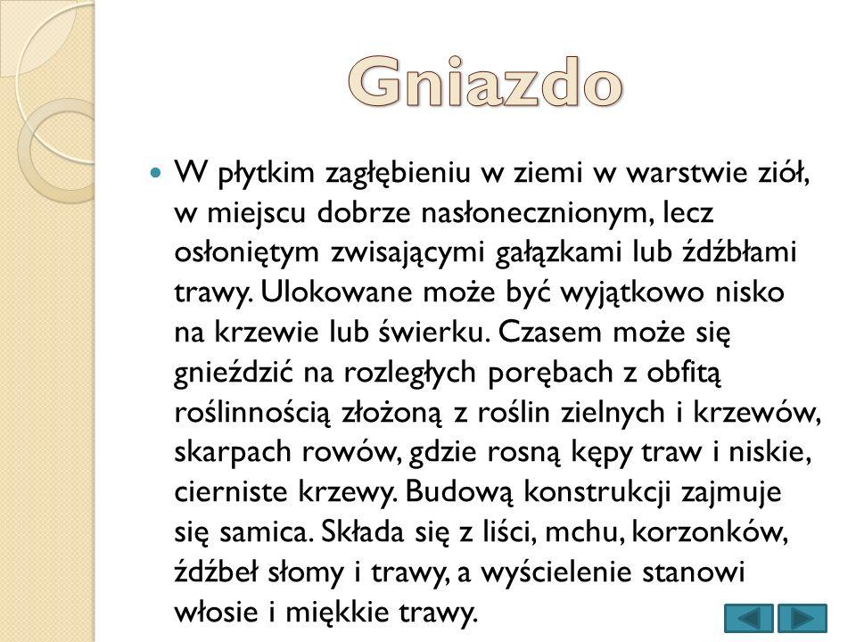 wikipedia.pl forumjurajskie.pl Jerzygrzesiak.pl Tomaszproszek.pl Przyrodniczek.pl Fotoforum.gazeta.pl Otop.org.pl Bmpankowscy.pl Przyrodniczo.udl.pl Foto.ntorg.pl ozywicpola.pl