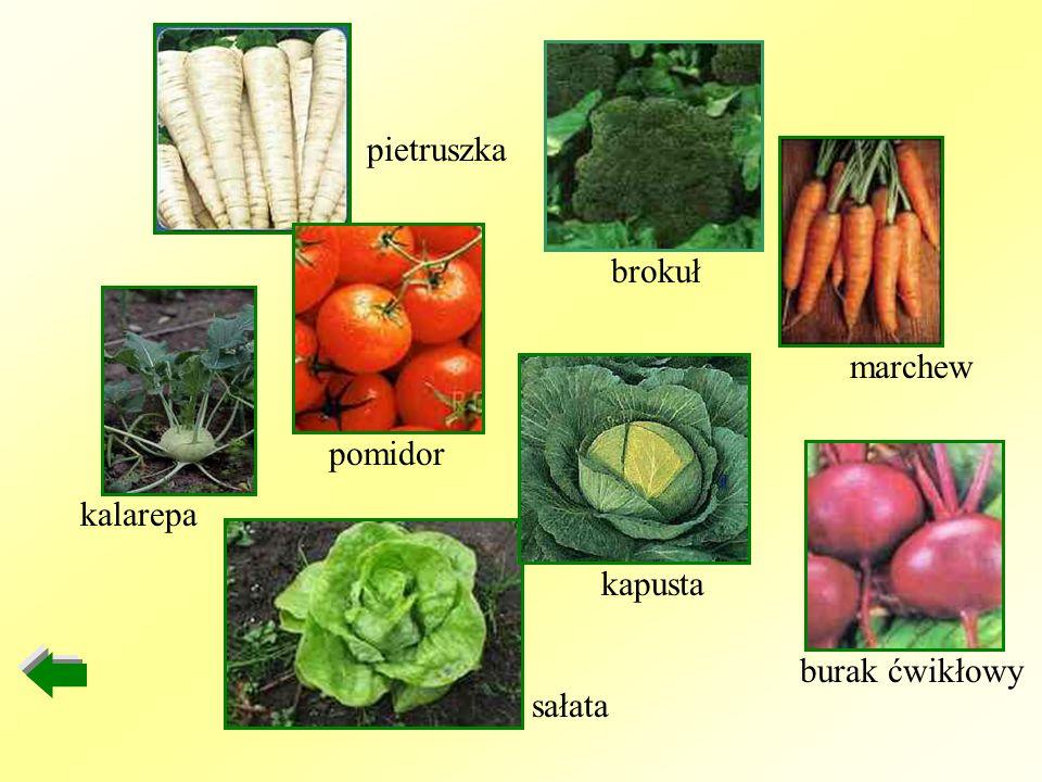 kalarepa sałata kapusta burak ćwikłowy marchew brokuł pomidor pietruszka