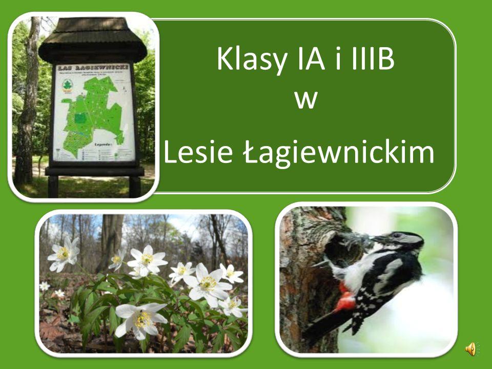 Klasy IA i IIIB w Lesie Łagiewnickim