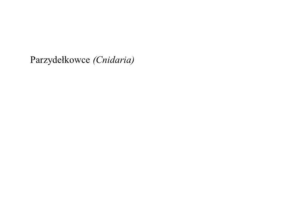Parzydełkowce (Cnidaria)