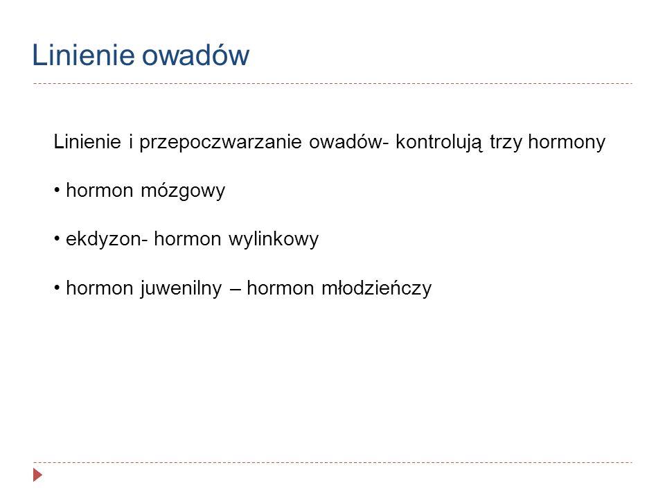 Linienie owadów Linienie i przepoczwarzanie owadów- kontrolują trzy hormony hormon mózgowy ekdyzon- hormon wylinkowy hormon juwenilny – hormon młodzie