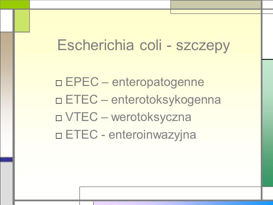 Escherichia coli - szczepy EPEC – enteropatogenne ETEC – enterotoksykogenna VTEC – werotoksyczna ETEC - enteroinwazyjna