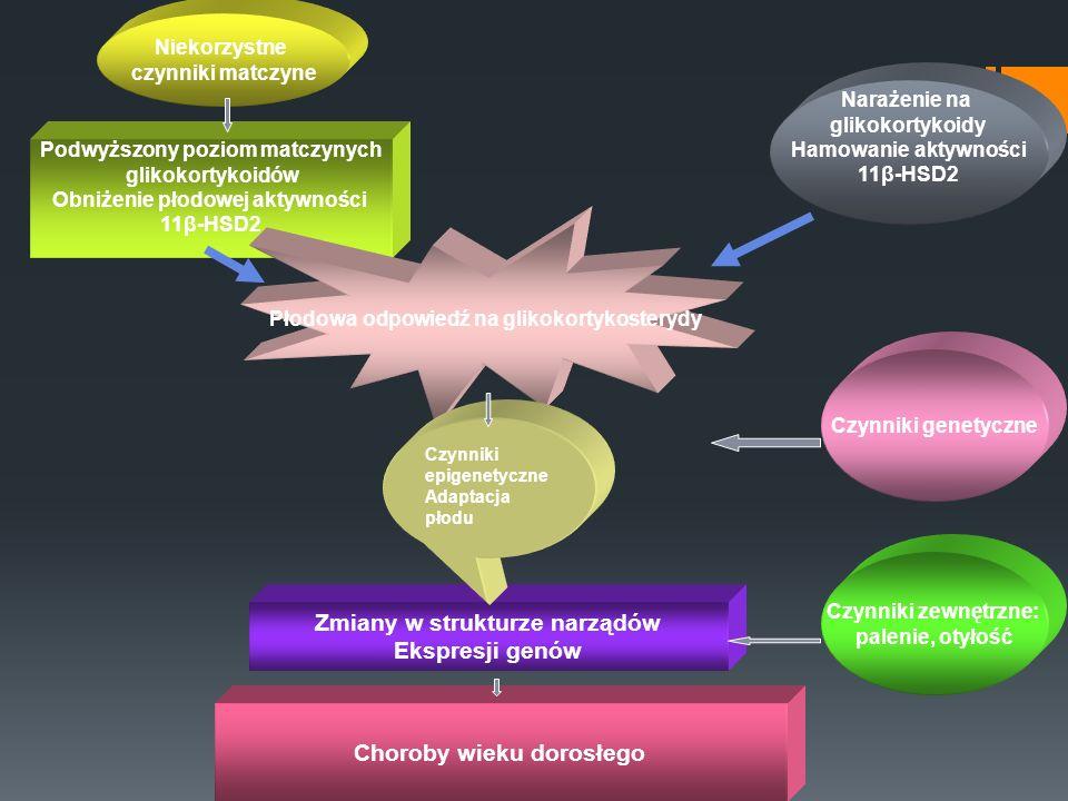 Niekorzystne czynniki matczyne Podwyższony poziom matczynych glikokortykoidów Obniżenie płodowej aktywności 11β-HSD2 Płodowa odpowiedź na glikokortyko