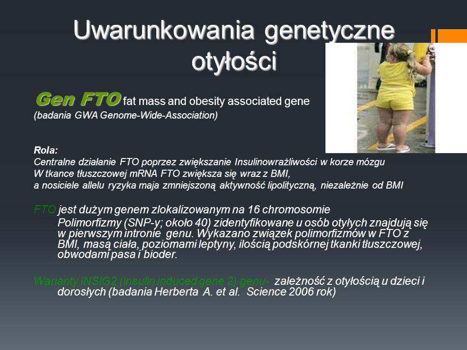 Uwarunkowania genetyczne otyłości Gen FTO Gen FTO fat mass and obesity associated gene (badania GWA Genome-Wide-Association) Rola: Centralne działanie