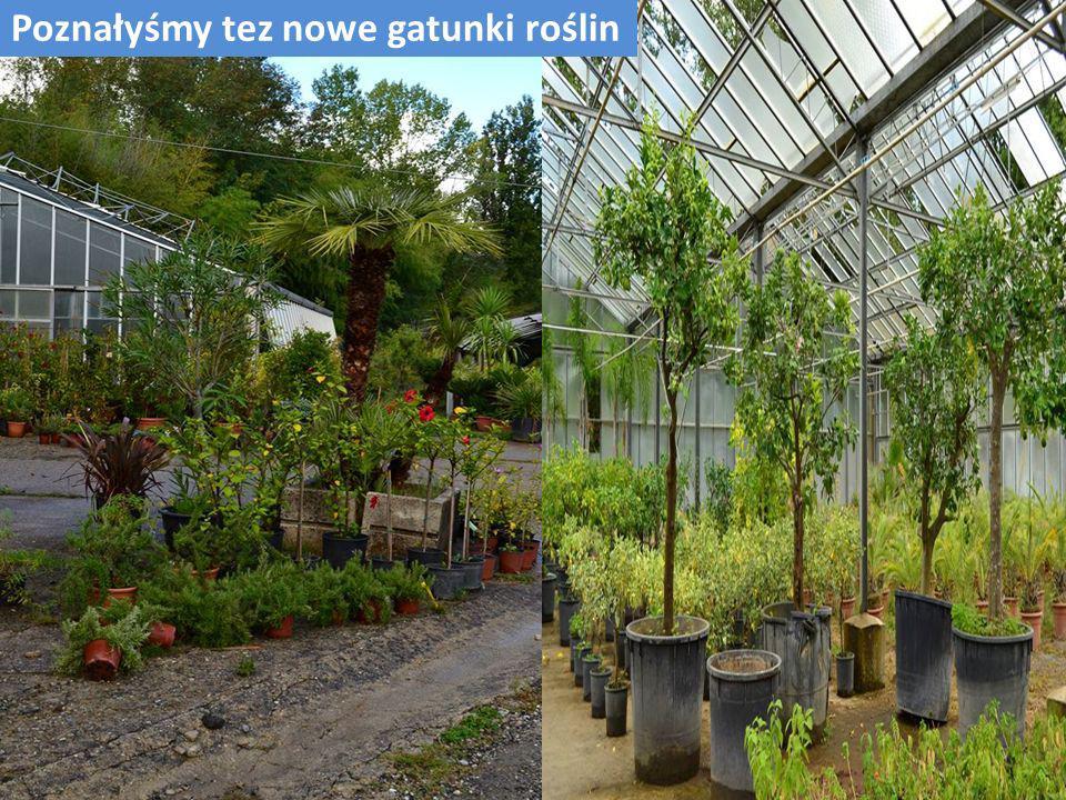 Poznałyśmy tez nowe gatunki roślin