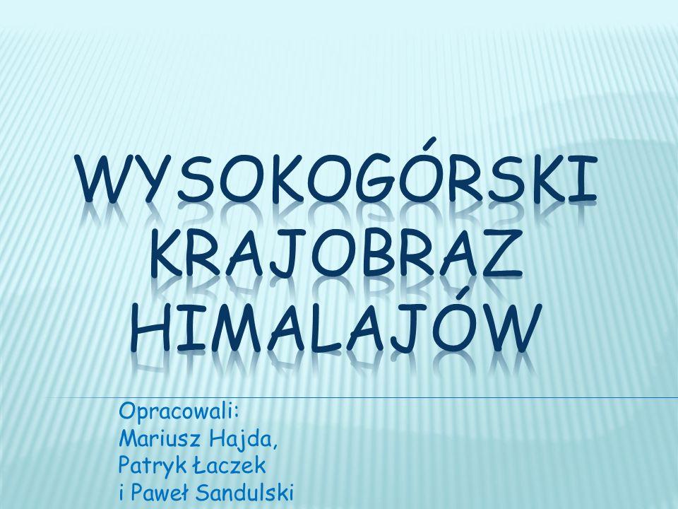 Opracowali: Mariusz Hajda, Patryk Łaczek i Paweł Sandulski
