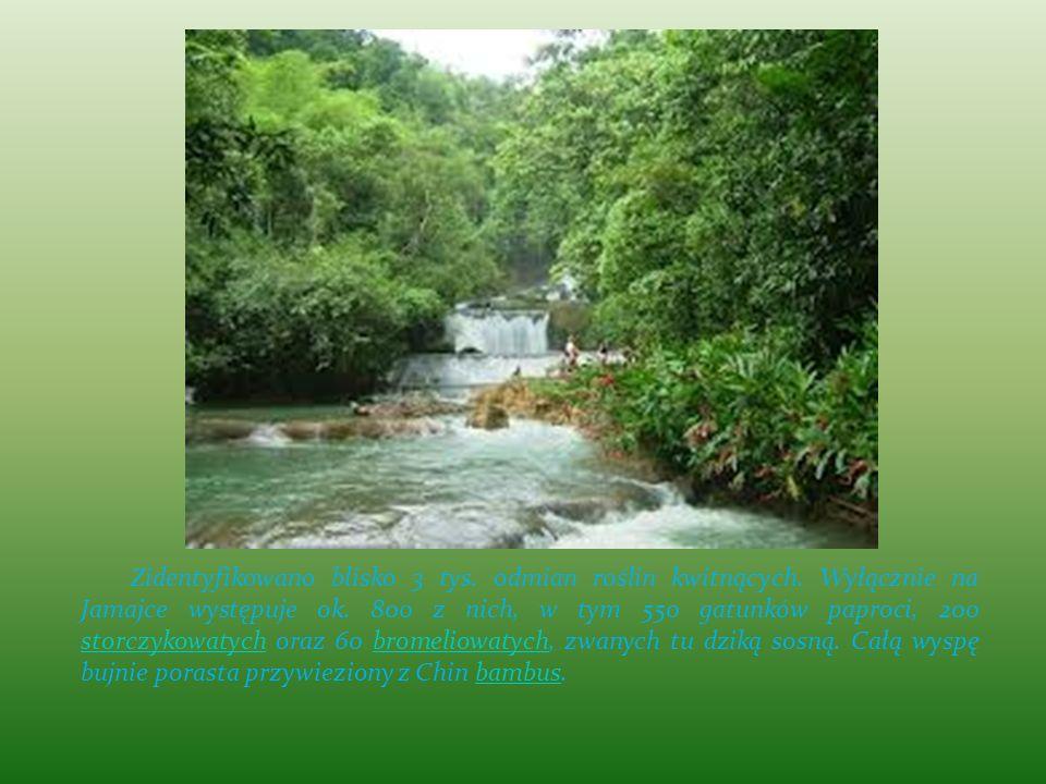 Zidentyfikowano blisko 3 tys. odmian roślin kwitnących. Wyłącznie na Jamajce występuje ok. 800 z nich, w tym 550 gatunków paproci, 200 storczykowatych
