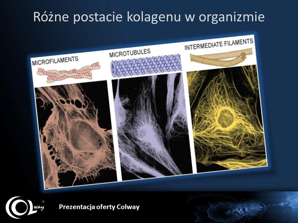 Prezentacja oferty Colway Różne postacie kolagenu w organizmie
