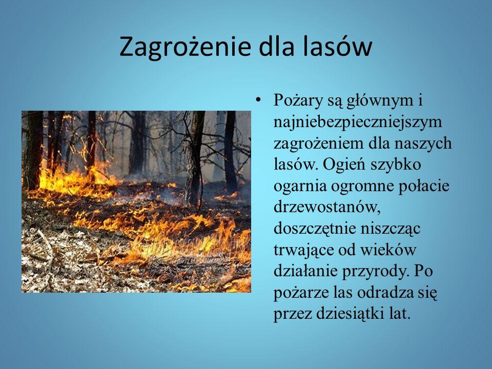 Zagrożenie dla lasów Pożary są głównym i najniebezpieczniejszym zagrożeniem dla naszych lasów.