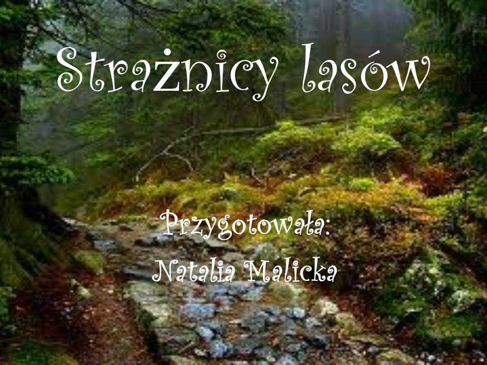 Stra ż nicy lasów Przygotowała: Natalia Malicka