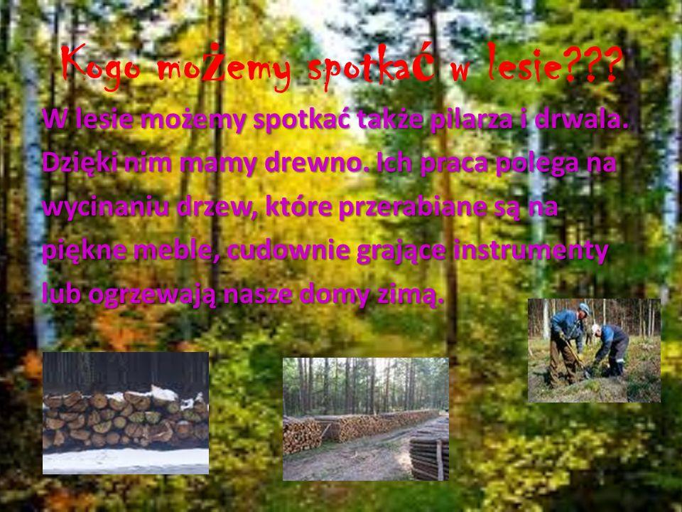 Kogo mo ż emy spotka ć w lesie??? W lesie możemy spotkać także pilarza i drwala. Dzięki nim mamy drewno. Ich praca polega na wycinaniu drzew, które pr