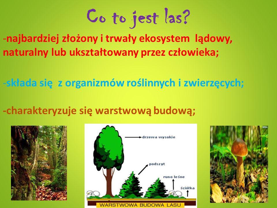 Co to jest las? -najbardziej złożony i trwały ekosystem lądowy, naturalny lub ukształtowany przez człowieka; -składa się z organizmów roślinnych i zwi