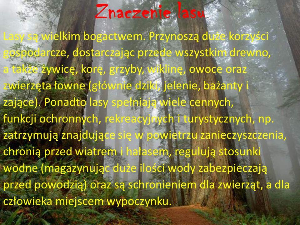 Kto dba o las i jego mieszka ń ców.