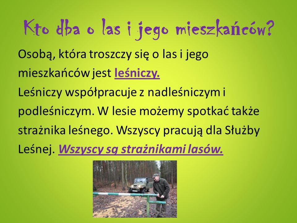 Kto dba o las i jego mieszka ń ców? Osobą, która troszczy się o las i jego mieszkańców jest leśniczy. Leśniczy współpracuje z nadleśniczym i podleśnic