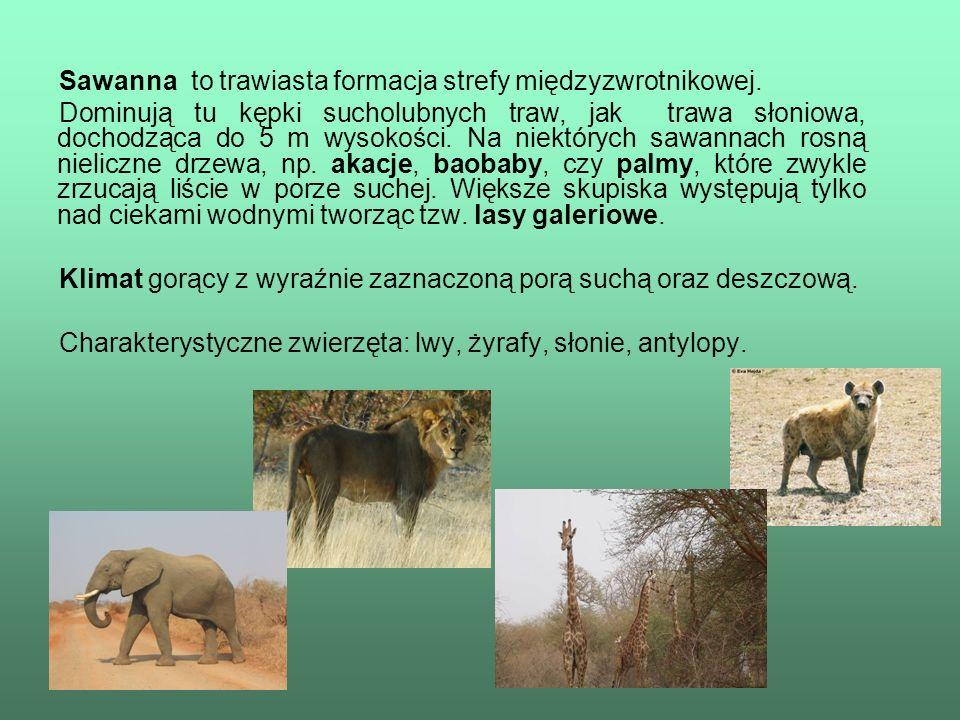 Sawanna to trawiasta formacja strefy międzyzwrotnikowej. Dominują tu kępki sucholubnych traw, jak trawa słoniowa, dochodząca do 5 m wysokości. Na niek