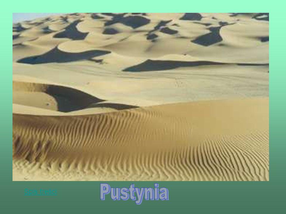 Pustynia – teren pozbawiony zwartej szaty roślinnej na skutek małej ilości opadów.