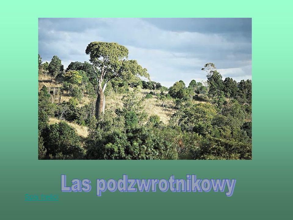 Roślinność strefy śródziemnomorskiej nazywana jest także roślinnością twardolistną.