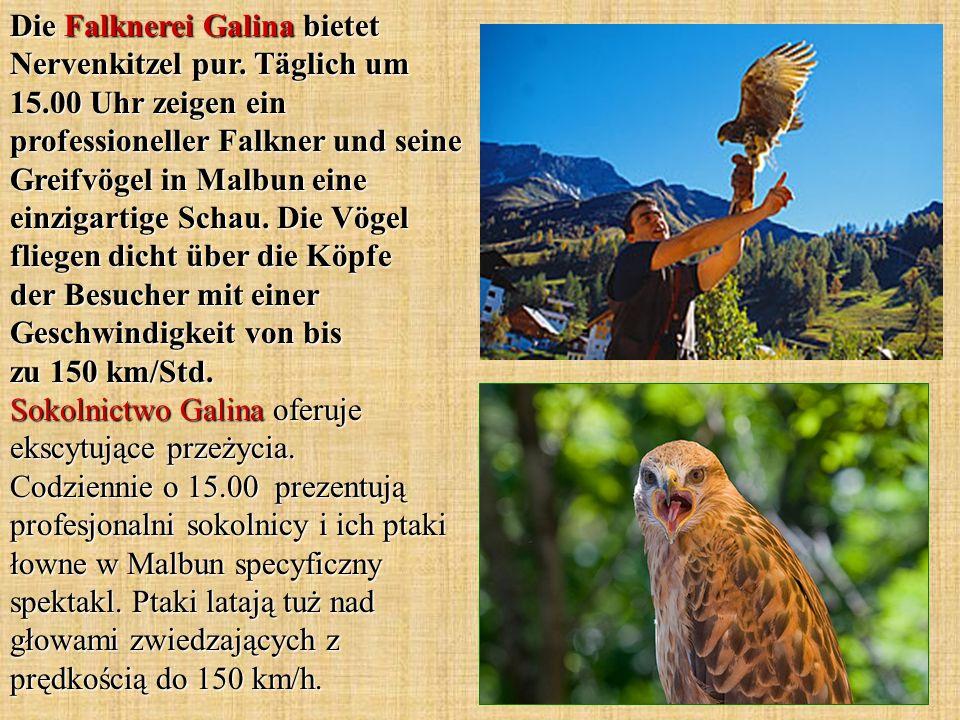 Die Falknerei Galina bietet Nervenkitzel pur. Täglich um 15.00 Uhr zeigen ein professioneller Falkner und seine Greifvögel in Malbun eine einzigartige