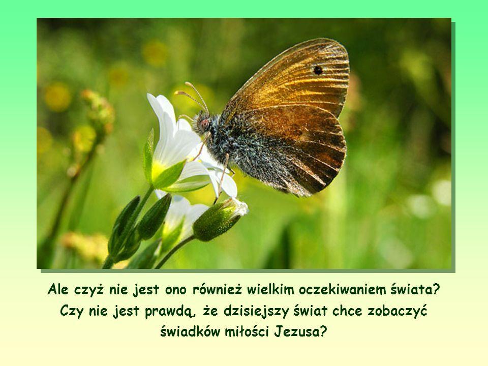 Jego przesłanie jest aż nazbyt jasne. Jest to wezwanie do tej autentyczności chrześcijańskiej, na którą Jezus kładł tak wielki nacisk.