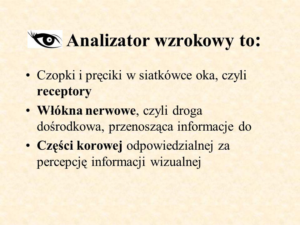 Analizator wzrokowy to : Czopki i pręciki w siatkówce oka, czyli receptory Włókna nerwowe, czyli droga dośrodkowa, przenosząca informacje do Części korowej odpowiedzialnej za percepcję informacji wizualnej