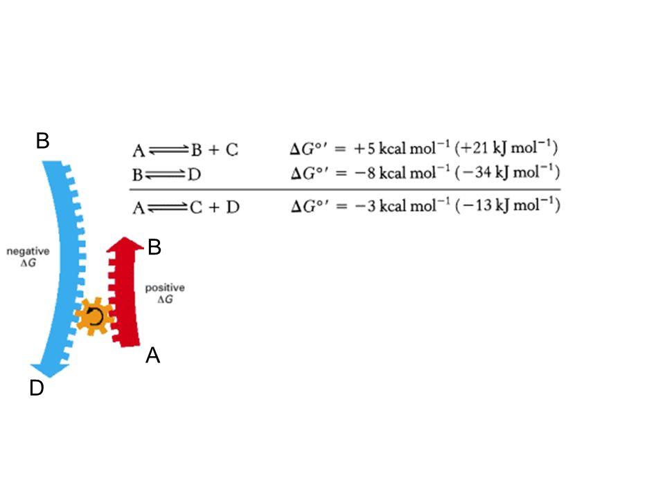 Szybkość reakcji przy niskich st.subs. szybkość wzrasta liniowo przy wysokich st.