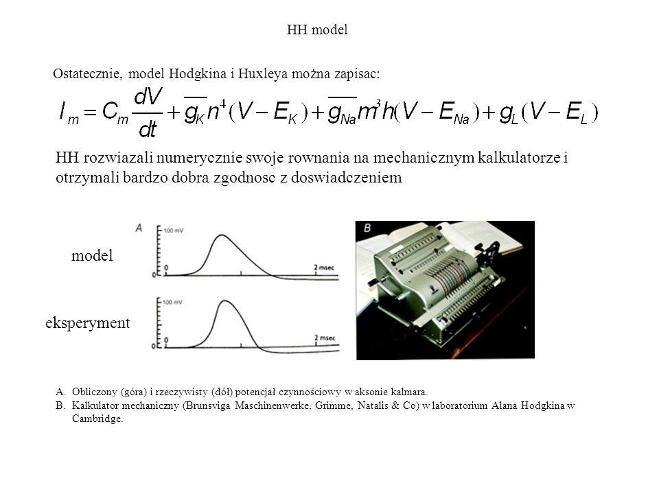 Ostatecznie, model Hodgkina i Huxleya można zapisac: HH model HH rozwiazali numerycznie swoje rownania na mechanicznym kalkulatorze i otrzymali bardzo