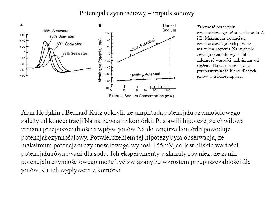 Potencjał czynnościowy – impuls sodowy Zależność potencjału czynnościowego od stężenia sodu. A i B: Maksimum potencjału czynnościowego maleje wraz mal