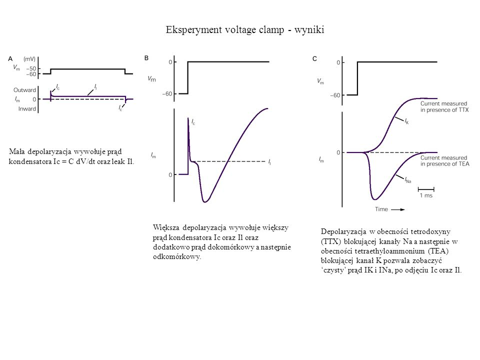 Eksperyment voltage clamp - wyniki Mała depolaryzacja wywołuje prąd kondensatora Ic = C dV/dt oraz leak Il. Większa depolaryzacja wywołuje większy prą