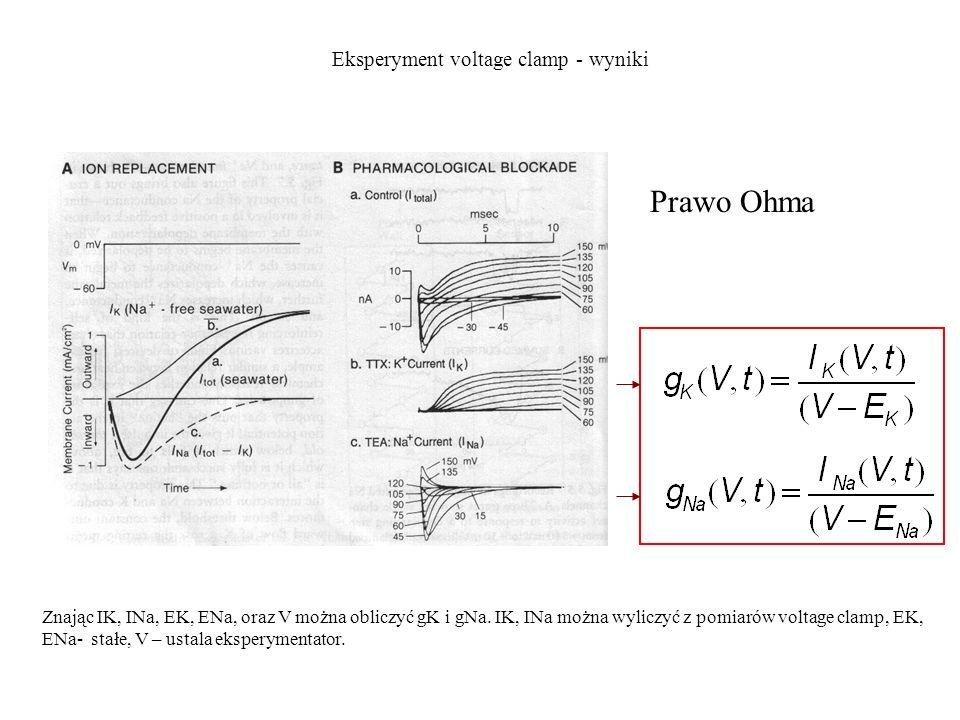 Eksperyment voltage clamp - wyniki Prawo Ohma Znając IK, INa, EK, ENa, oraz V można obliczyć gK i gNa. IK, INa można wyliczyć z pomiarów voltage clamp