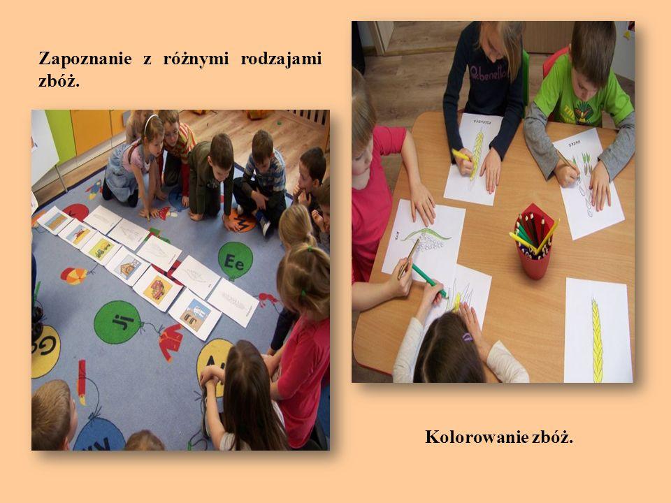 Dzieci oglądają różne rodzaje kasz, doszukują się różnic w wyglądzie i dotyku.