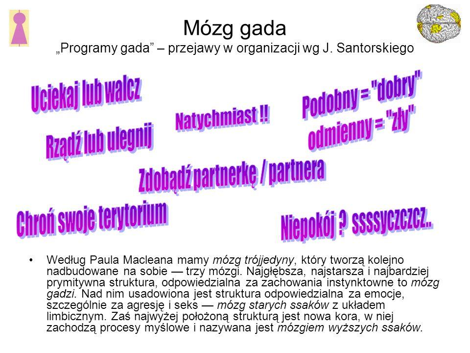 Mózg gada Programy gada – przejawy w organizacji wg J.