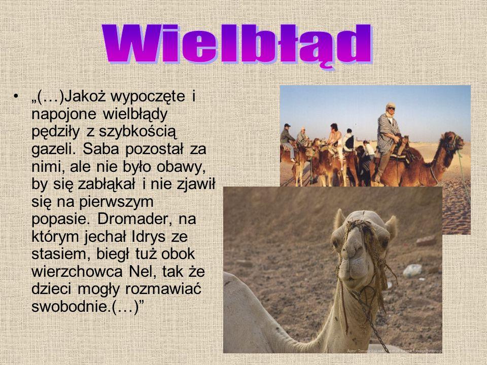(…)Oto na wielkiej skale leżał potężny lew. Zdumieni i przerażeni Beduini nie wiedzieli, co począć. Potężny zwierz, ujrzawszy jeźdźców i konie, podnió