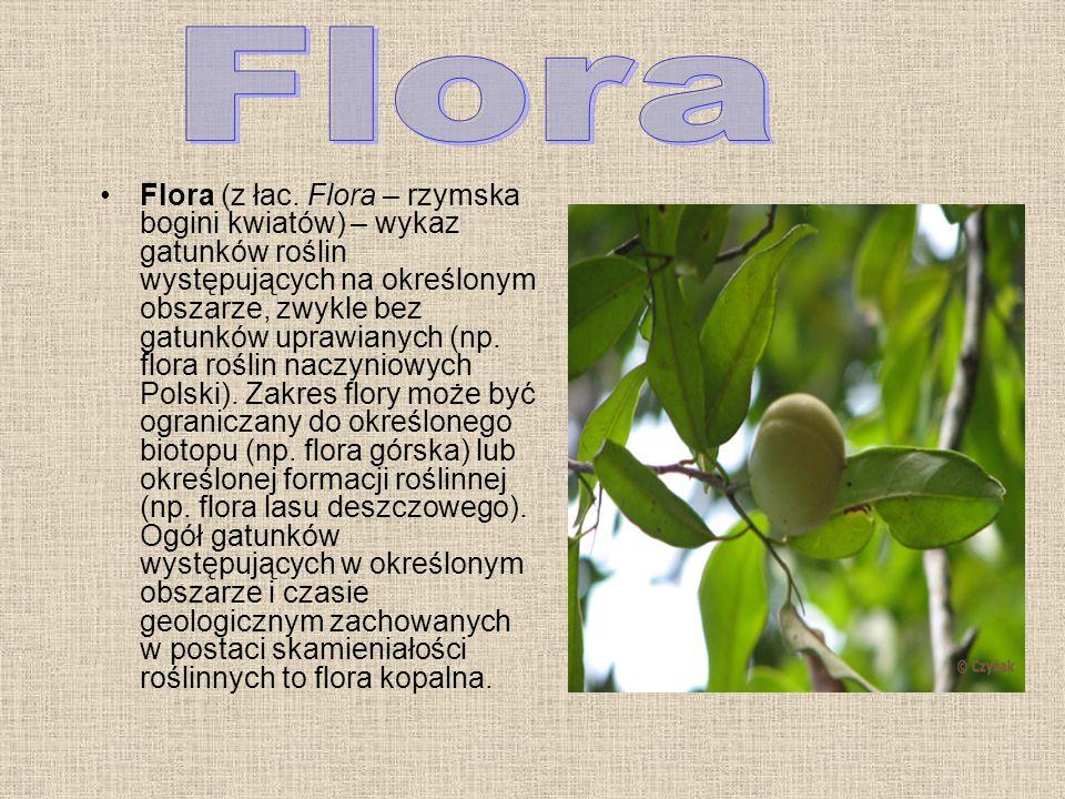 Flora (z łac.